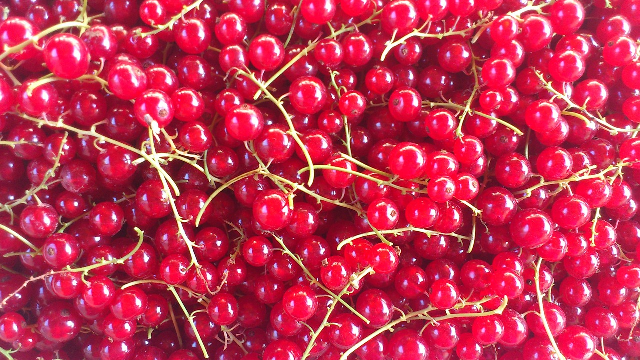 red currant fruit berry free photo
