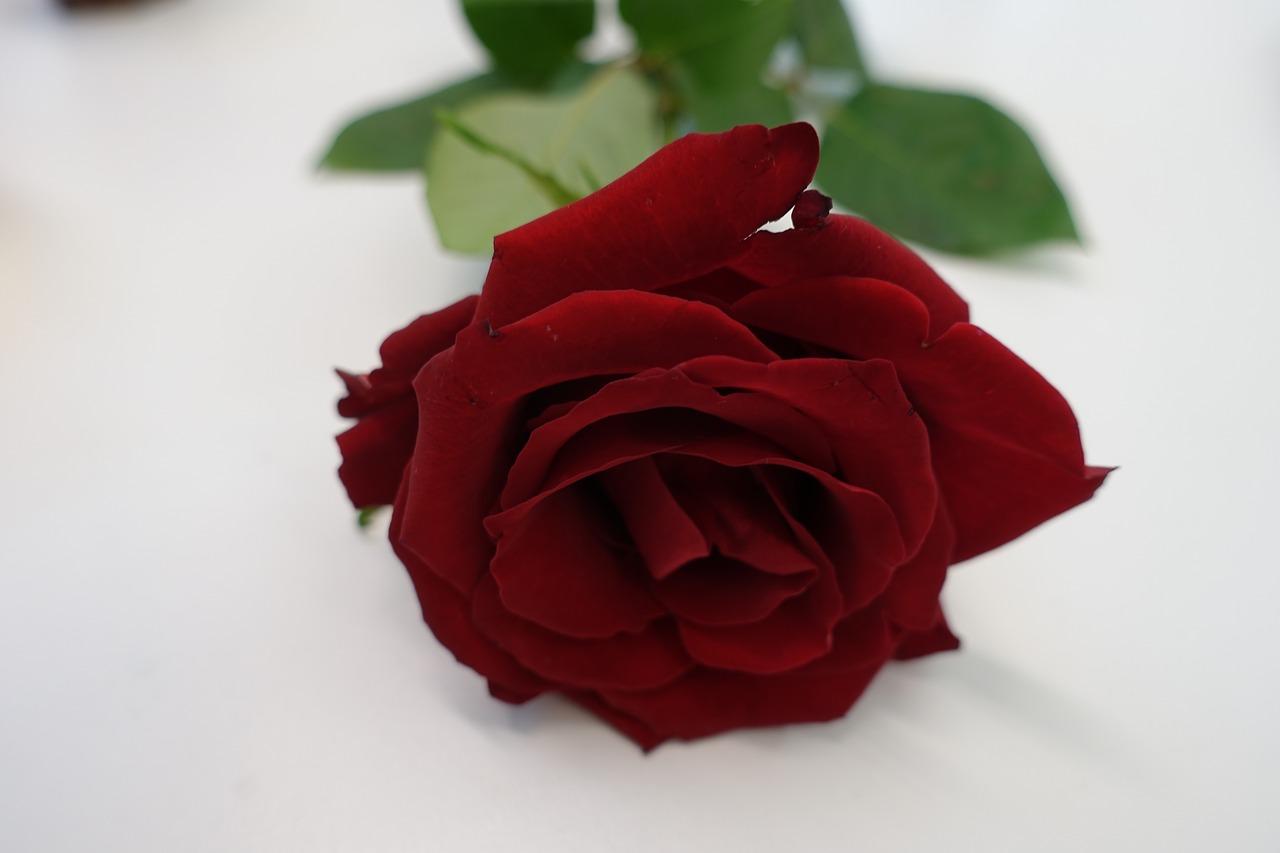 Red rose,love,heart,rose,romance - free image from needpix.com