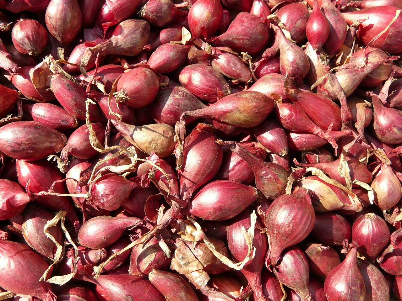 red shallots shallot noble onion free photo