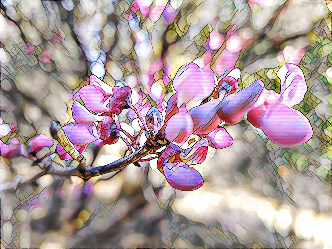 redbud flower stylized free photo