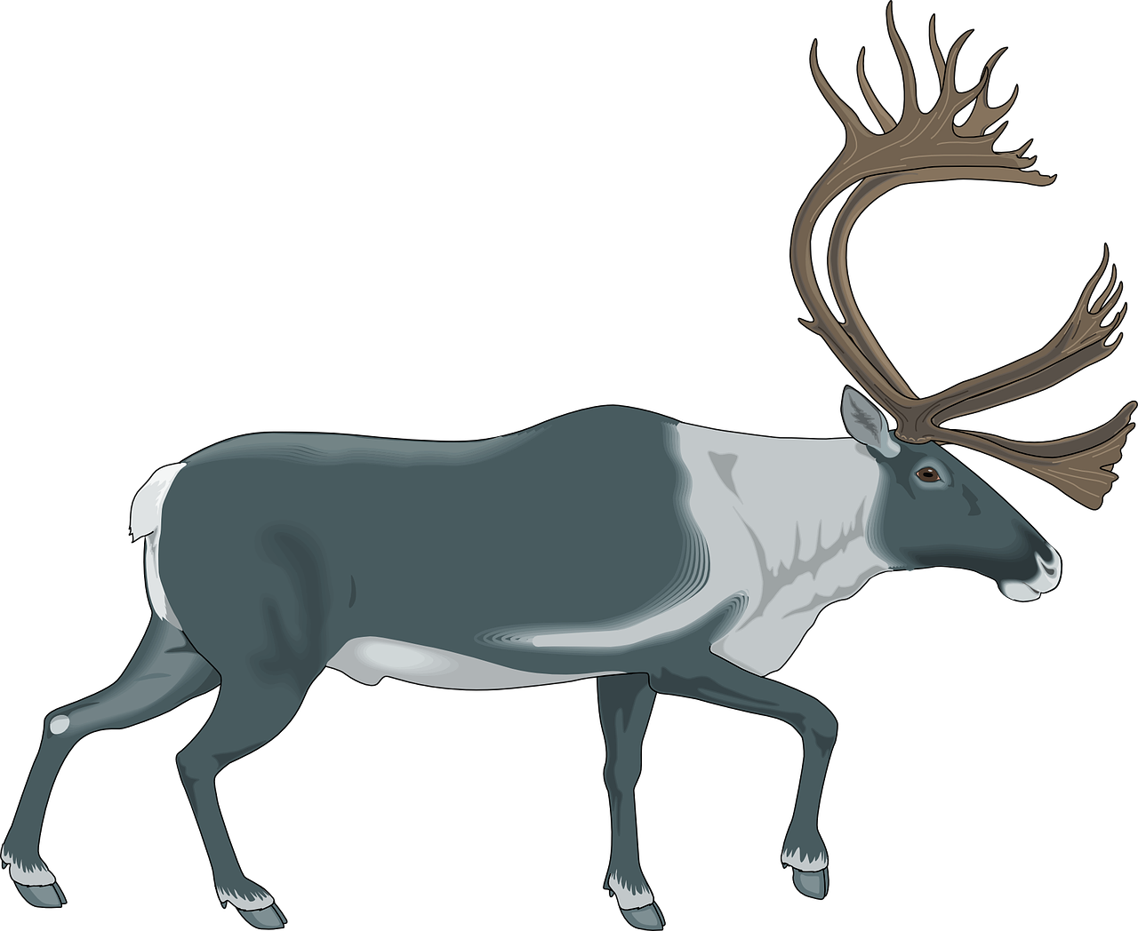 reindeer gray white free photo