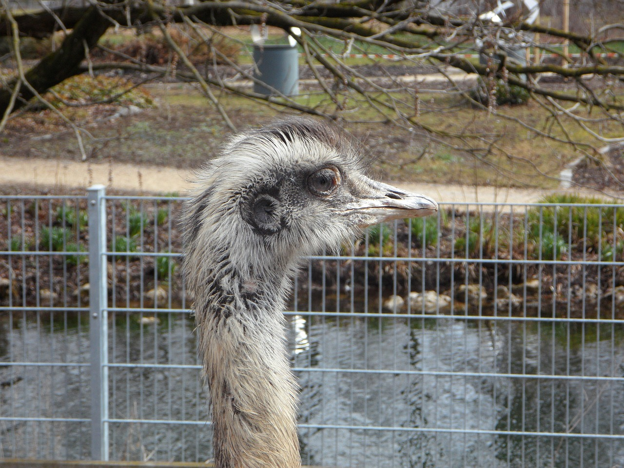 rhea bird cheeky bird free photo