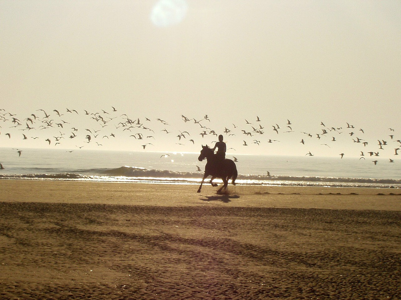 ride horse beach free photo