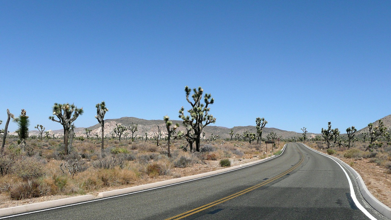 road joshua tree joshua tree national park free photo