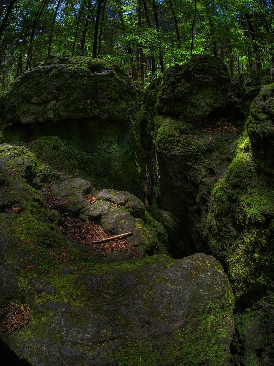 rock moss forest free photo