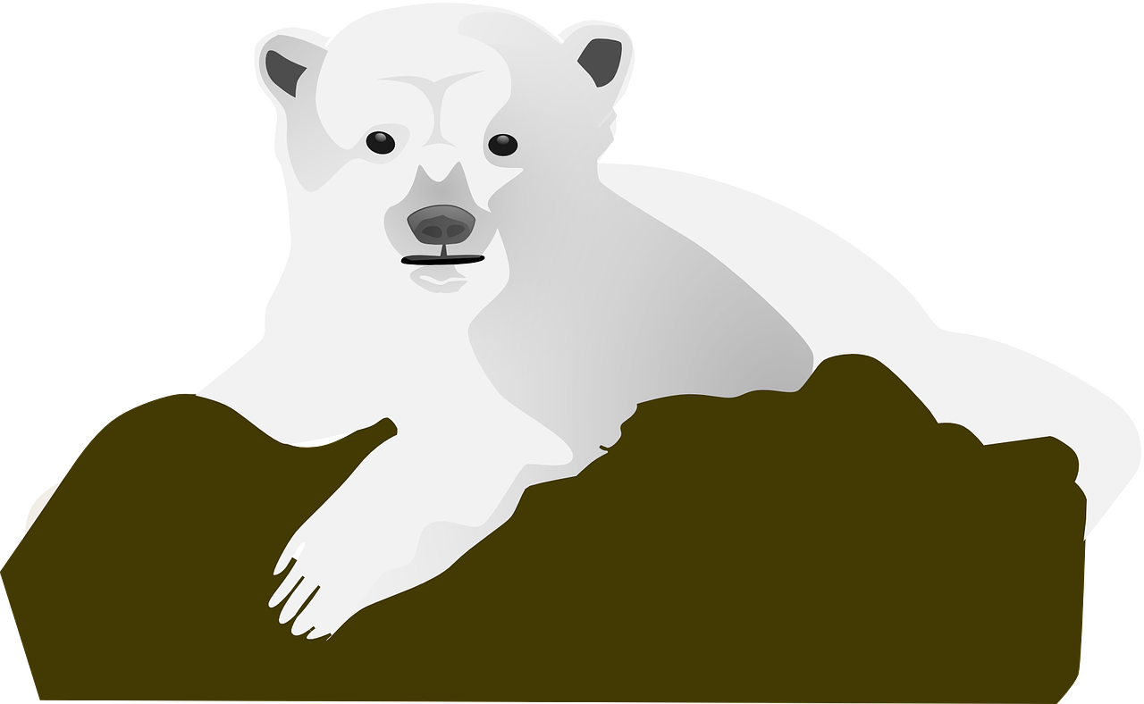 rock,bear,snow,polar,animal,cold,baby,young,little,ice,wild,mammal,free vector graphics,free pictures, free photos, free images, royalty free, free illustrations, public domain