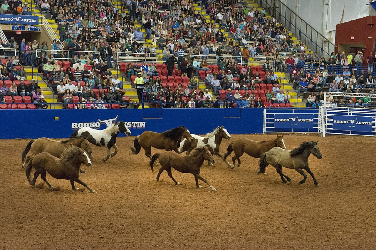 rodeo horses arena free photo
