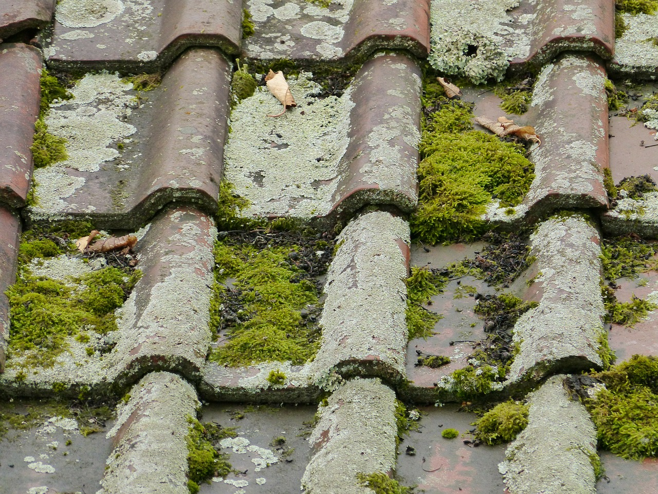 roof roofing tiles old free photo