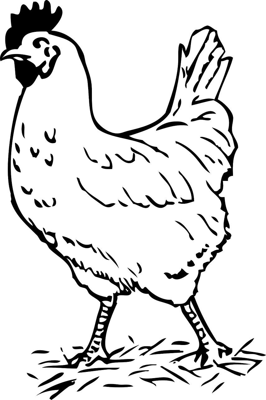 rooster,bird,chicken,farm,walking,poultry,hen,free vector graphics,free pictures, free photos, free images, royalty free, free illustrations, public domain