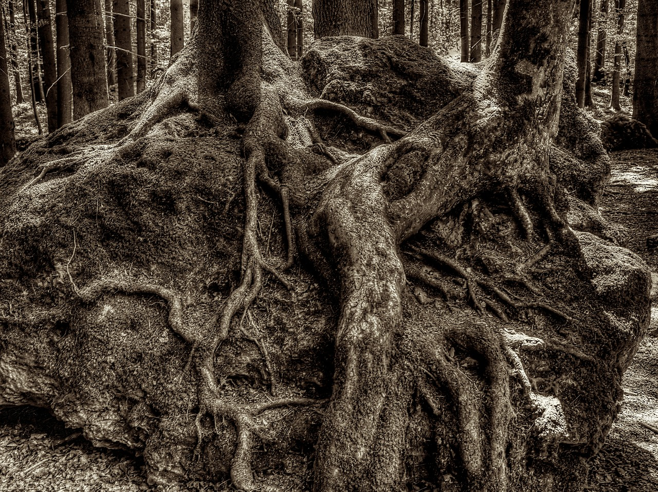 root tree root druid grove free picture