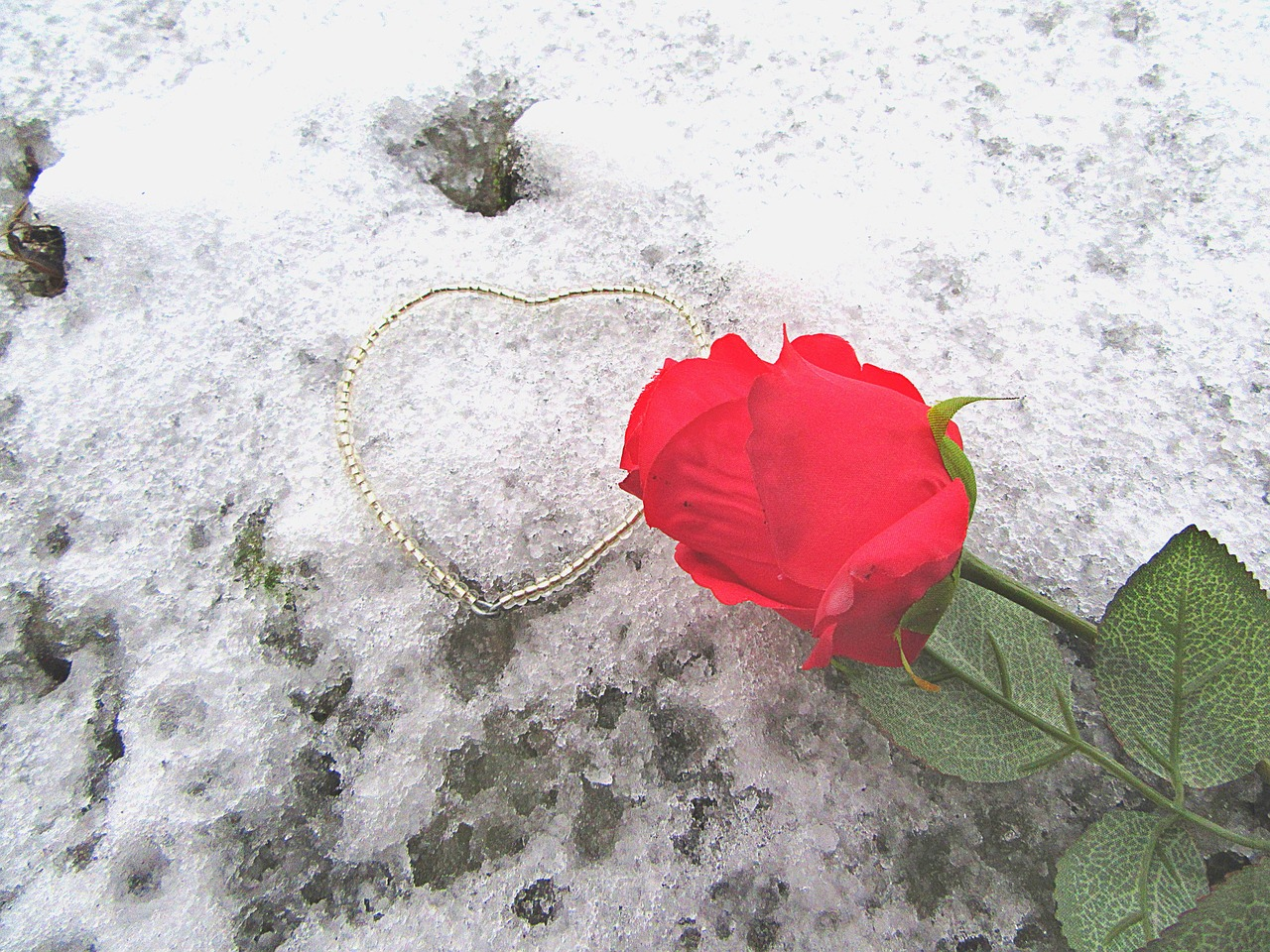rose,the heart of,snow,romance,love,decoration,romantic,valentine,heart shape,in love,romantic love,atmosphere,free pictures, free photos, free images, royalty free, free illustrations