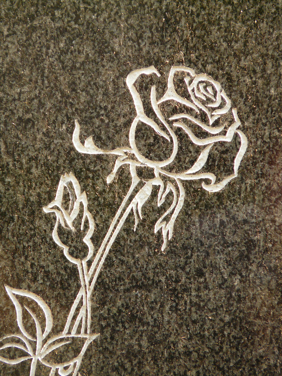 rose tombstone spiny free photo