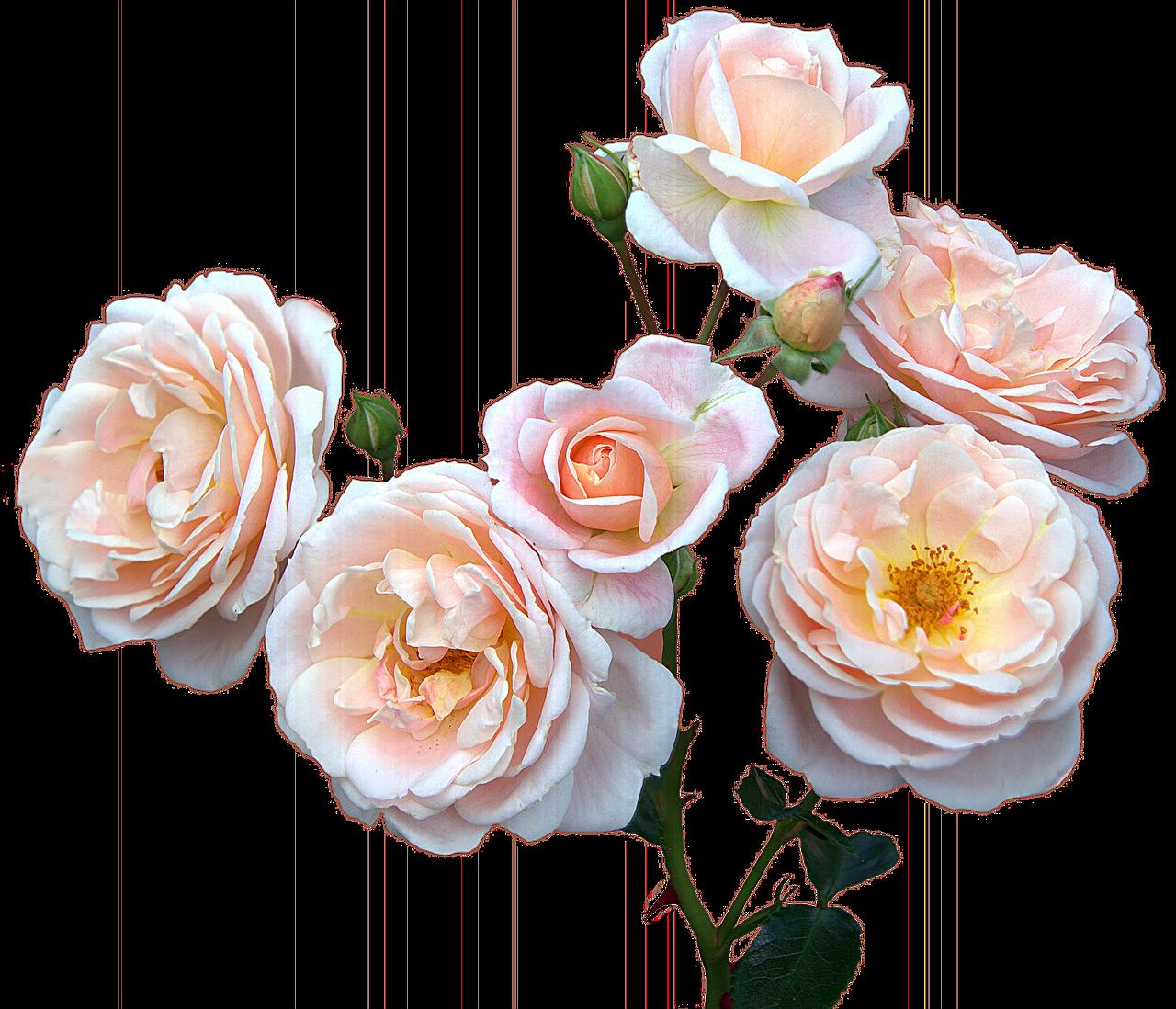 Roses Freemothers Daywomens Dayflowersbouquet Free Photo