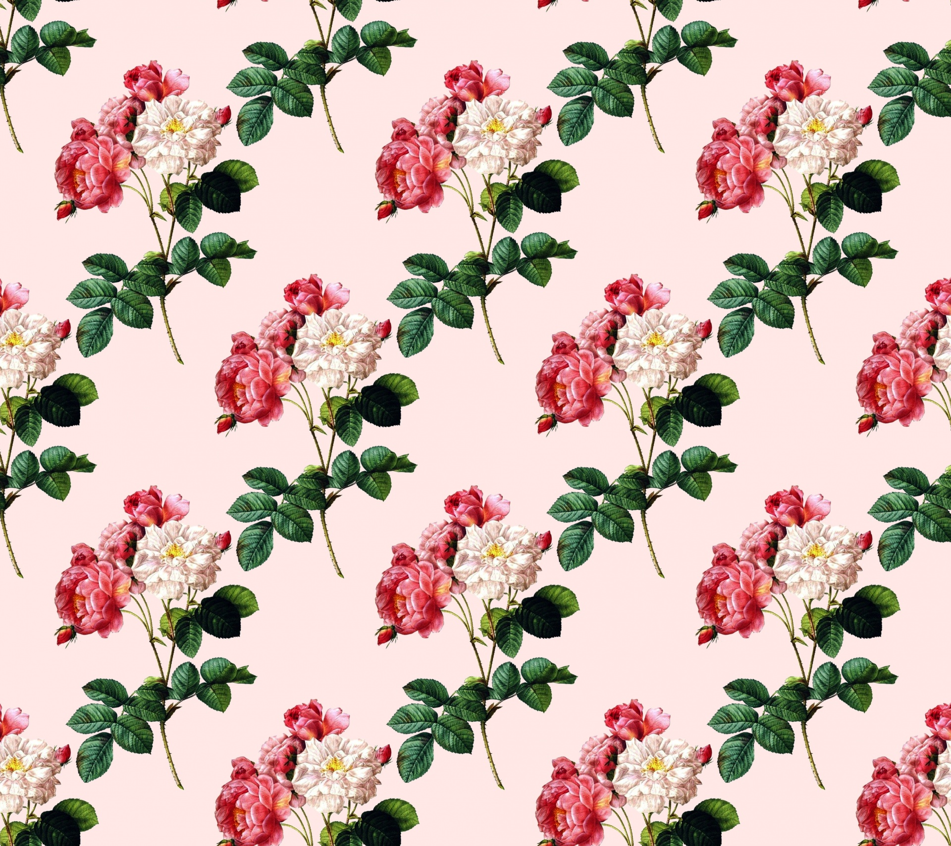 Roses Rose Flowers Floral Background Free Image From Needpix Com