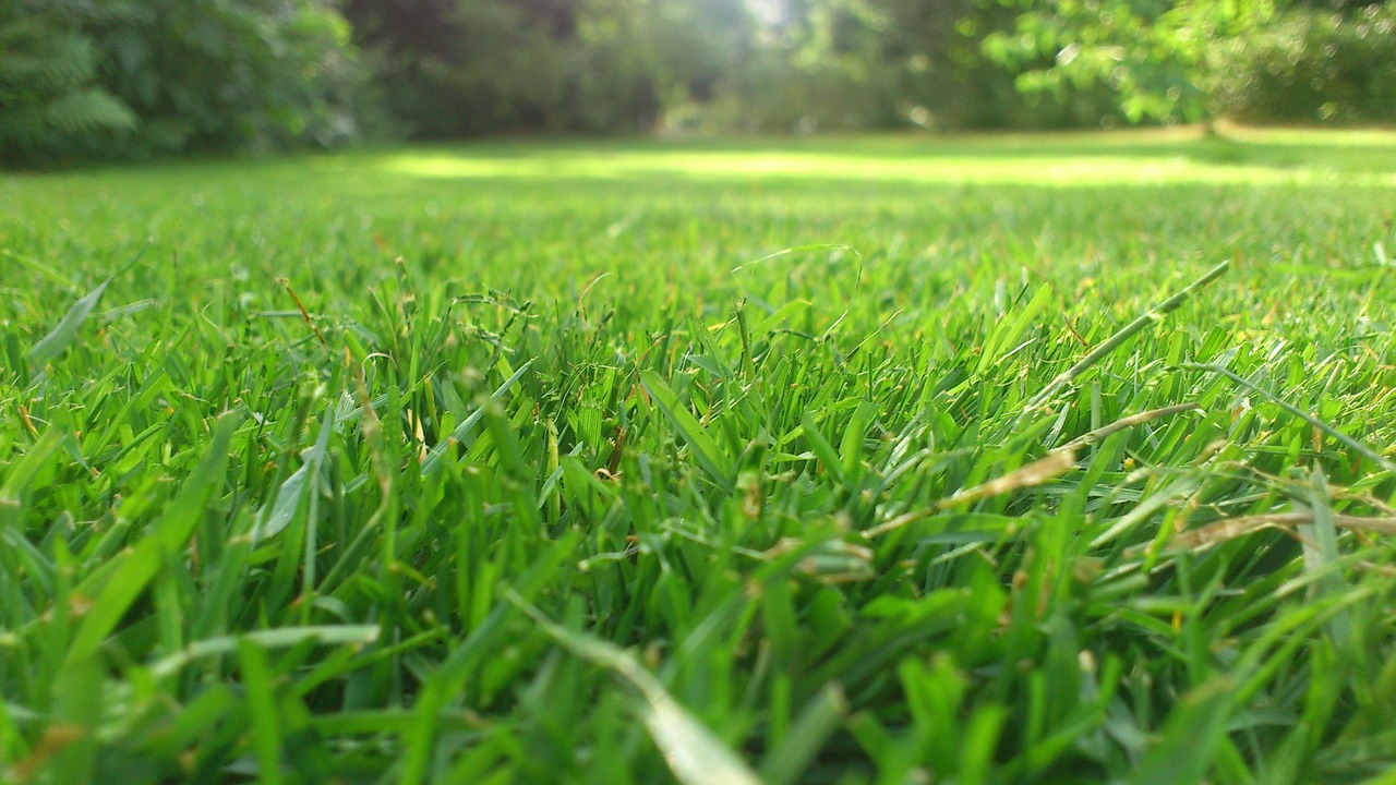 rush,garden,mow,grass,mowed,meadow,green,free pictures, free photos, free images, royalty free, free illustrations, public domain