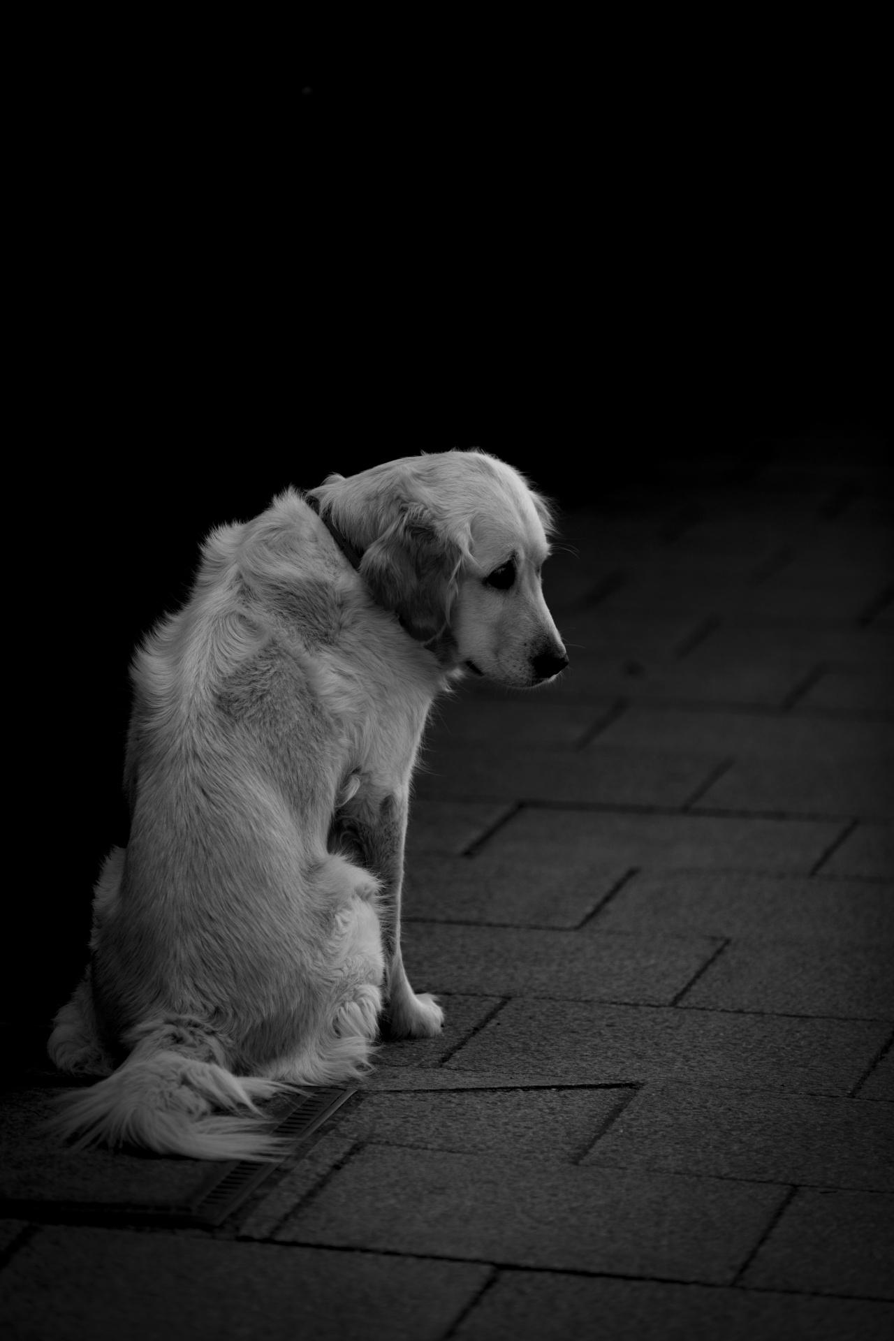 alone sad friend dog animal