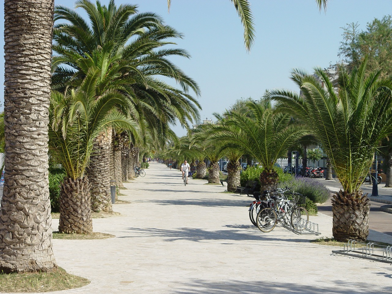 san benedetto del tronto promenade palm free photo