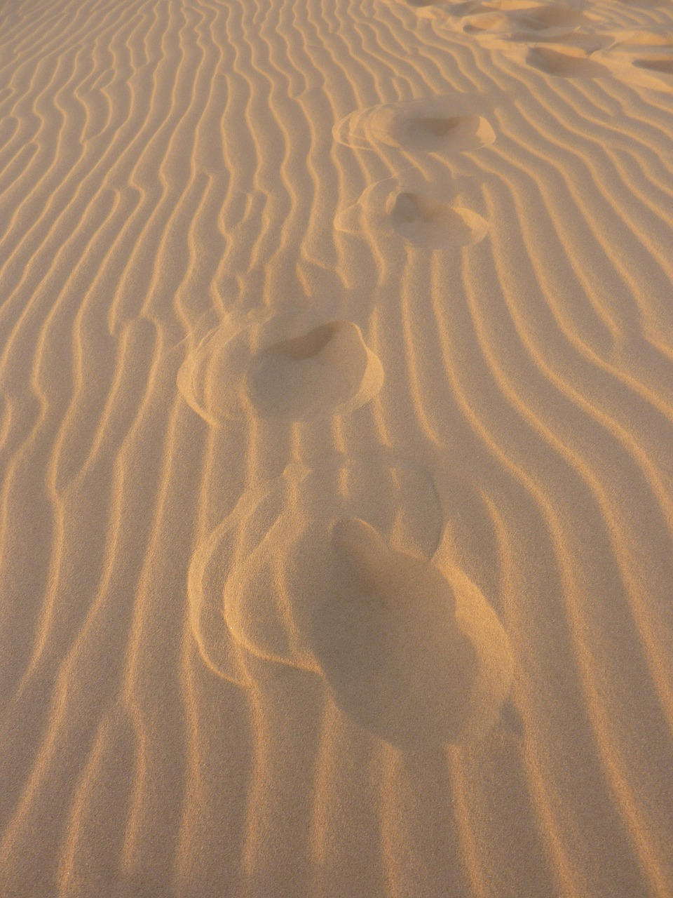 sand uruguay footprints in the sand free photo