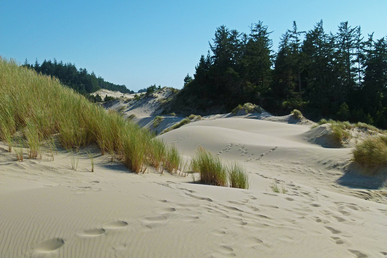 sand dunes dunes national park oregon free photo