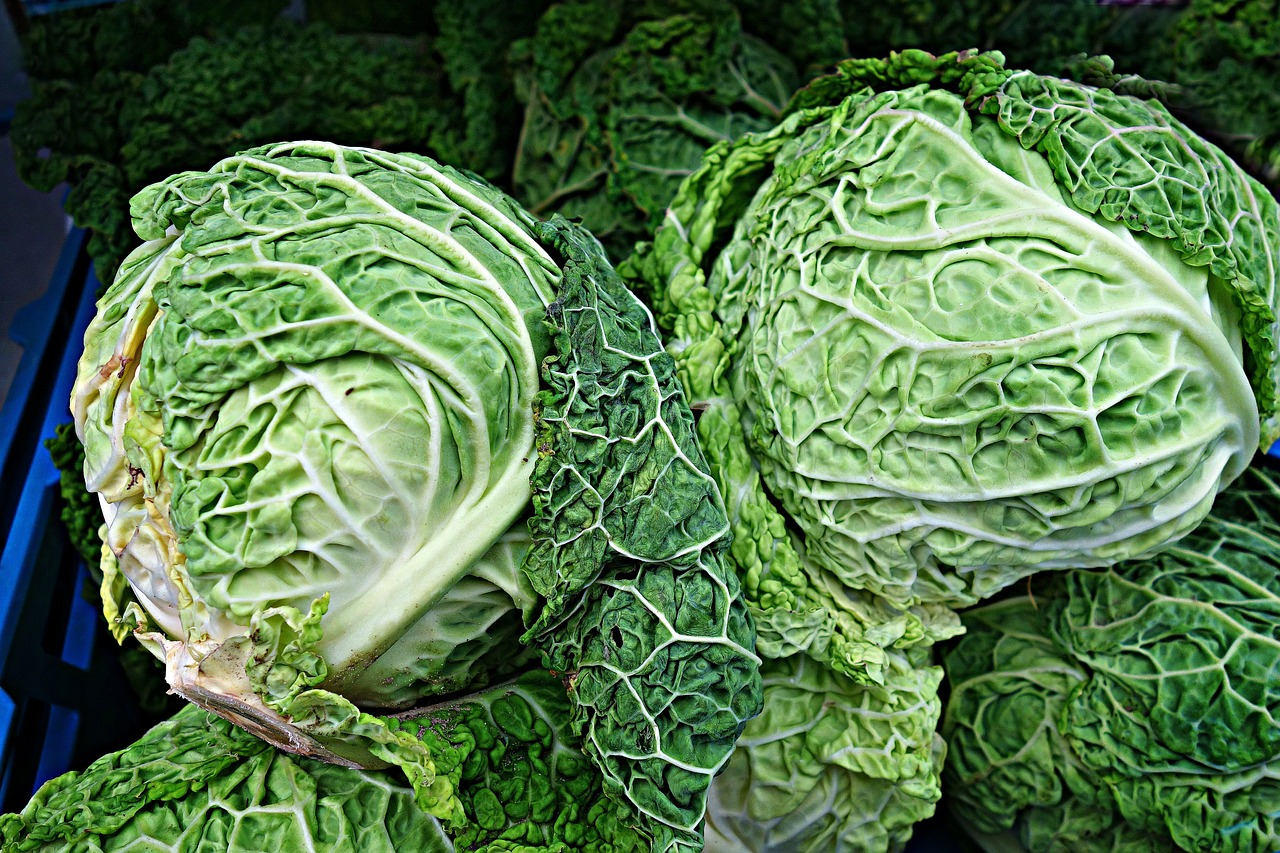savoy cabbage cabbage brassica oleracea free photo