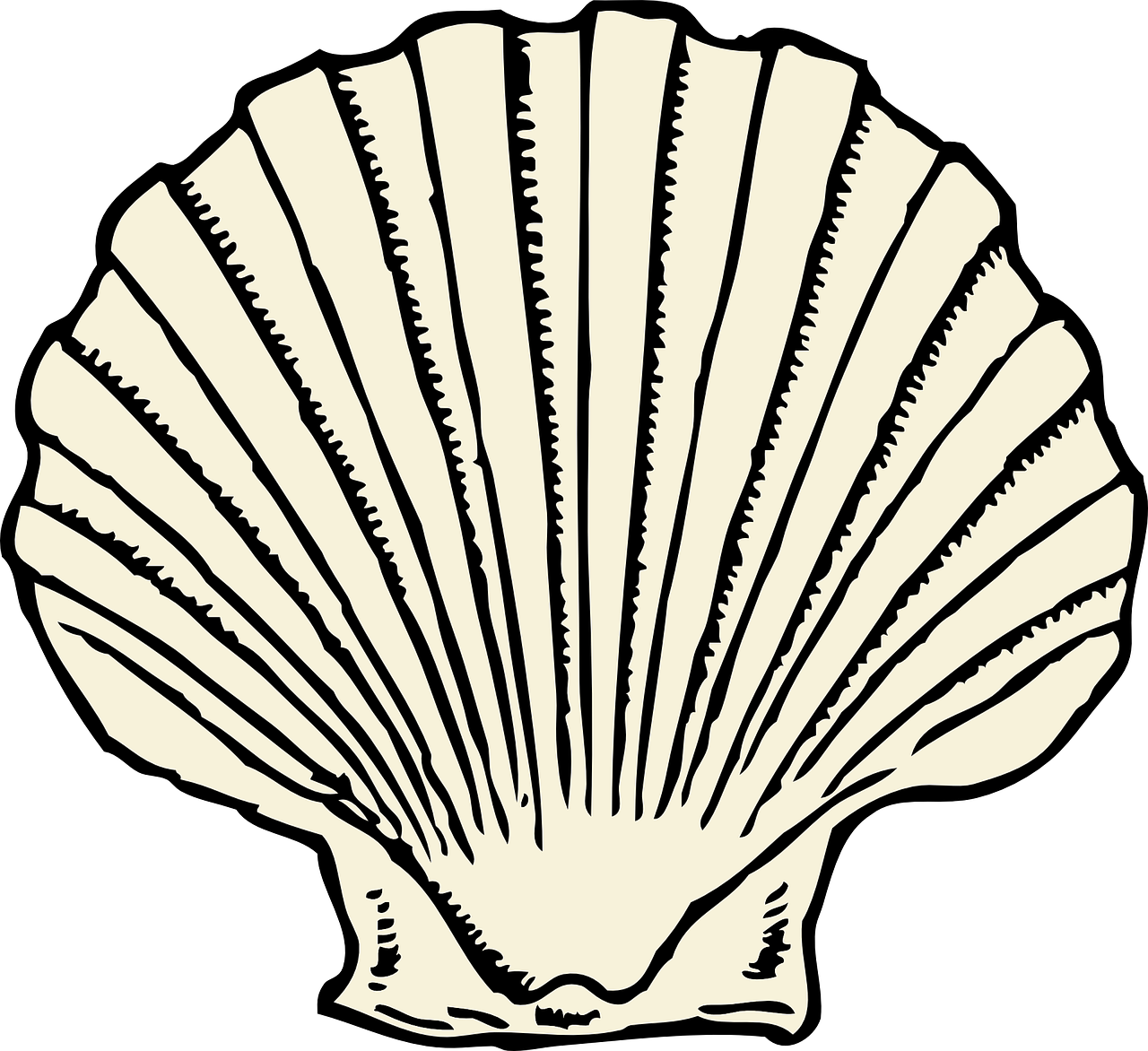 scallop clam shell free photo