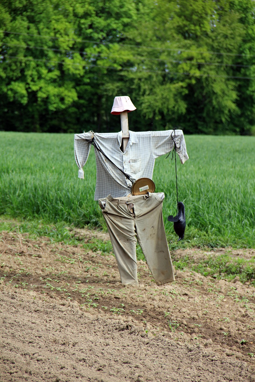 scarecrow agriculture country life free photo