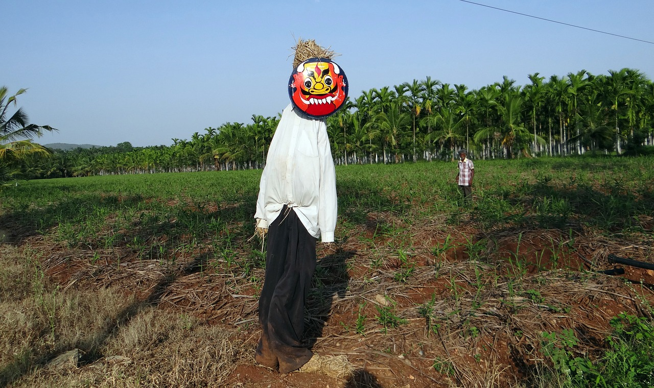 scarecrow plantation areca nut free photo
