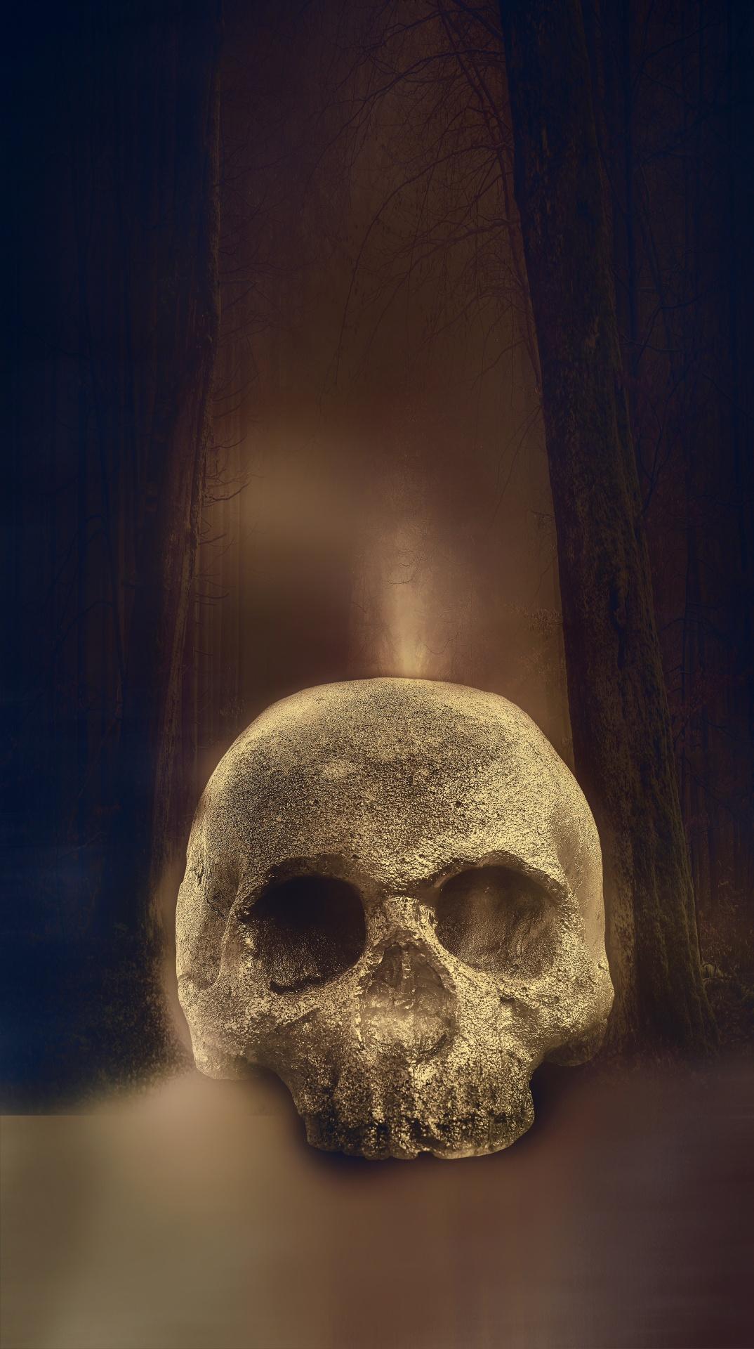 Skullskeletonbonesanatomybrainnbspskull Free Photo From