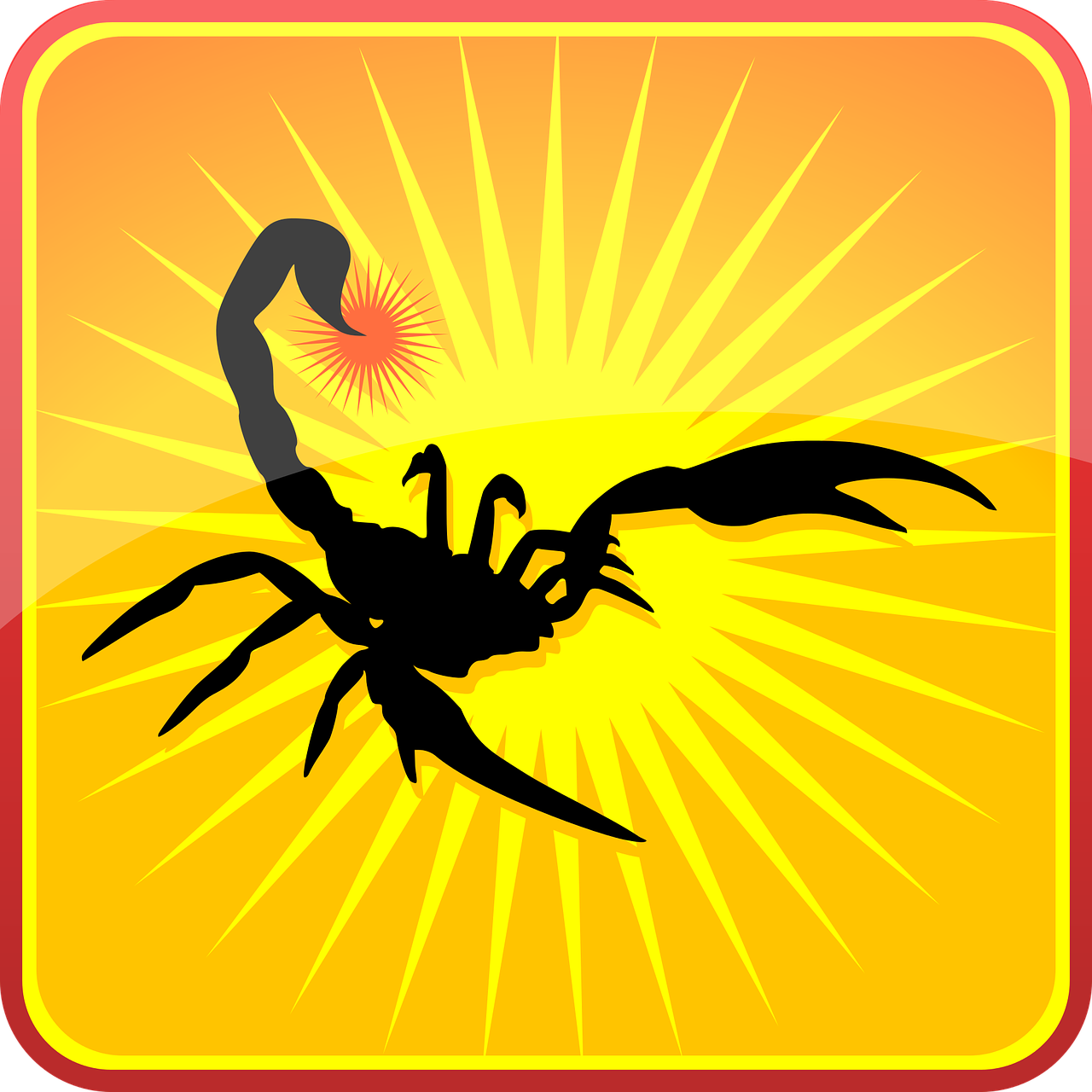 scorpion  silhouette  insects free photo