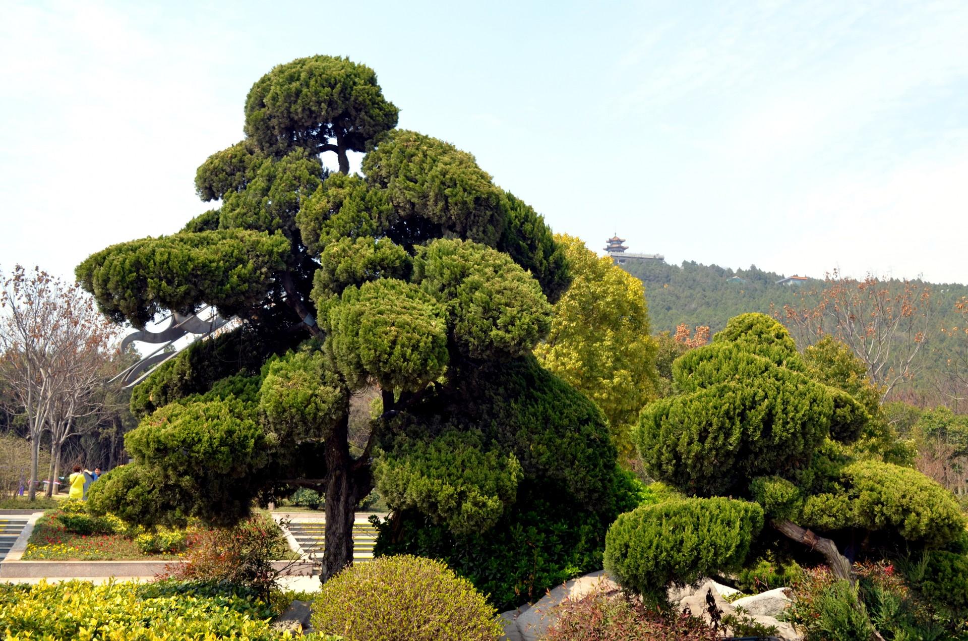 представляют собой фото вечнозеленые деревья деревьев однородное, медленное движение
