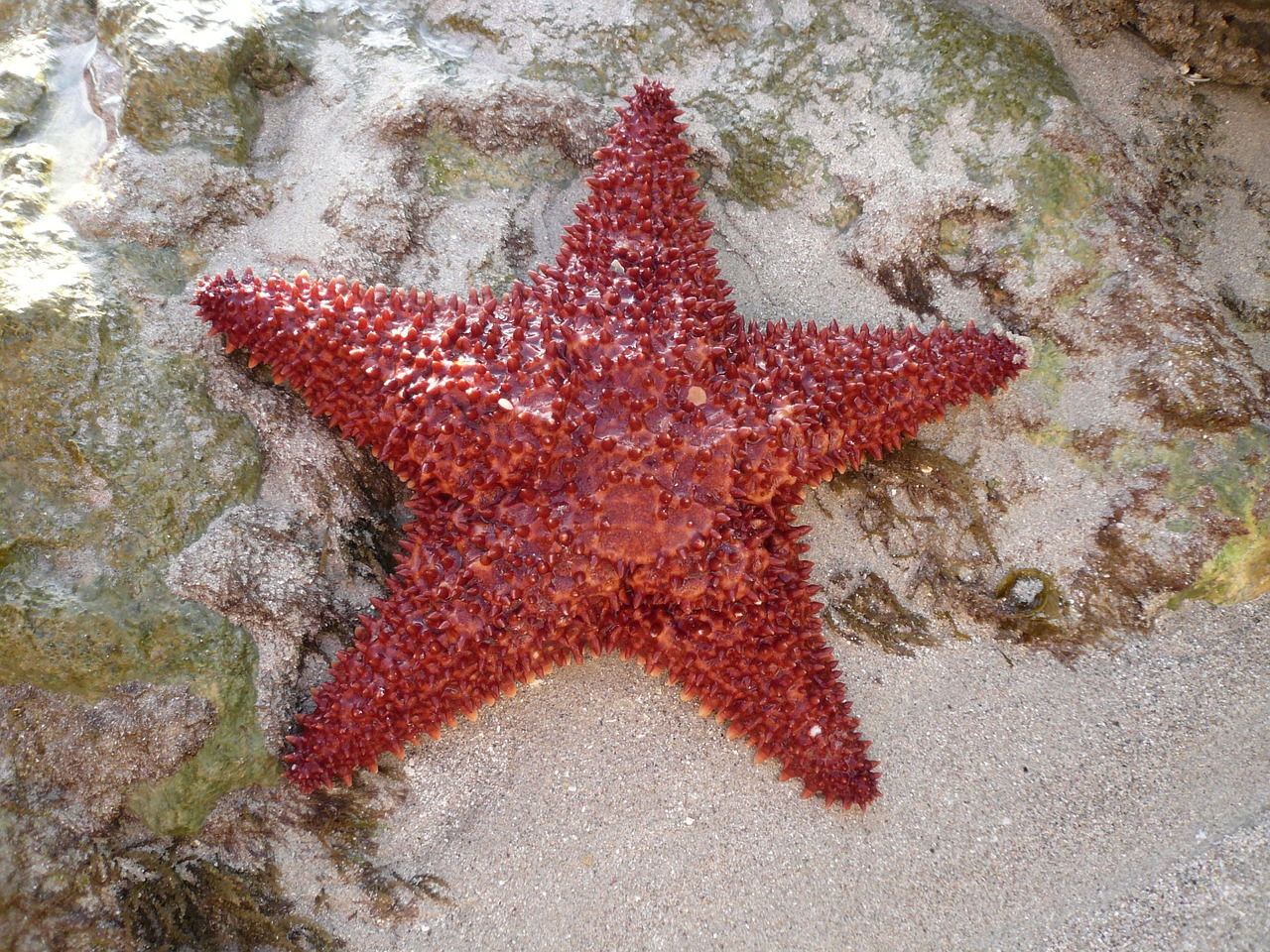 sea sea star island free photo