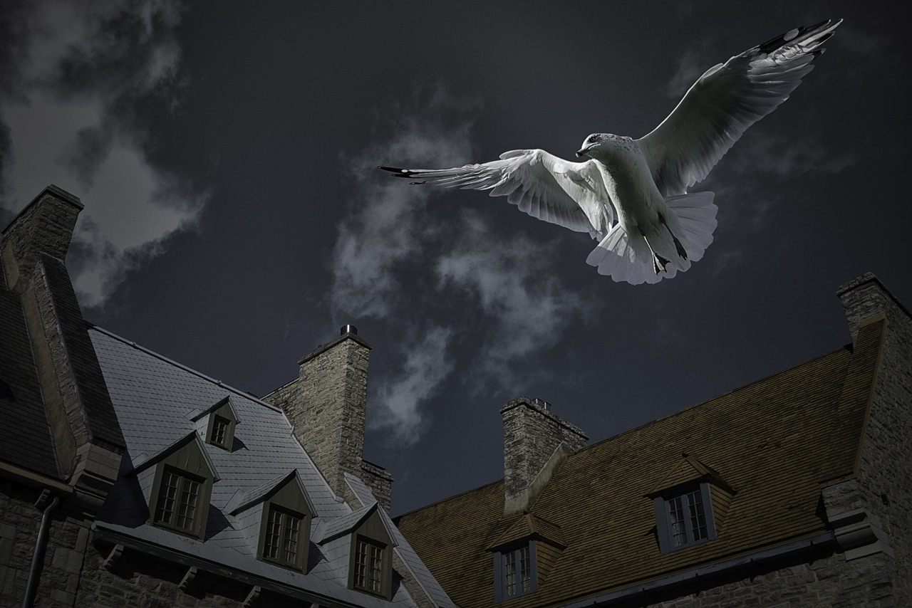 seagull place royale quebec city free photo