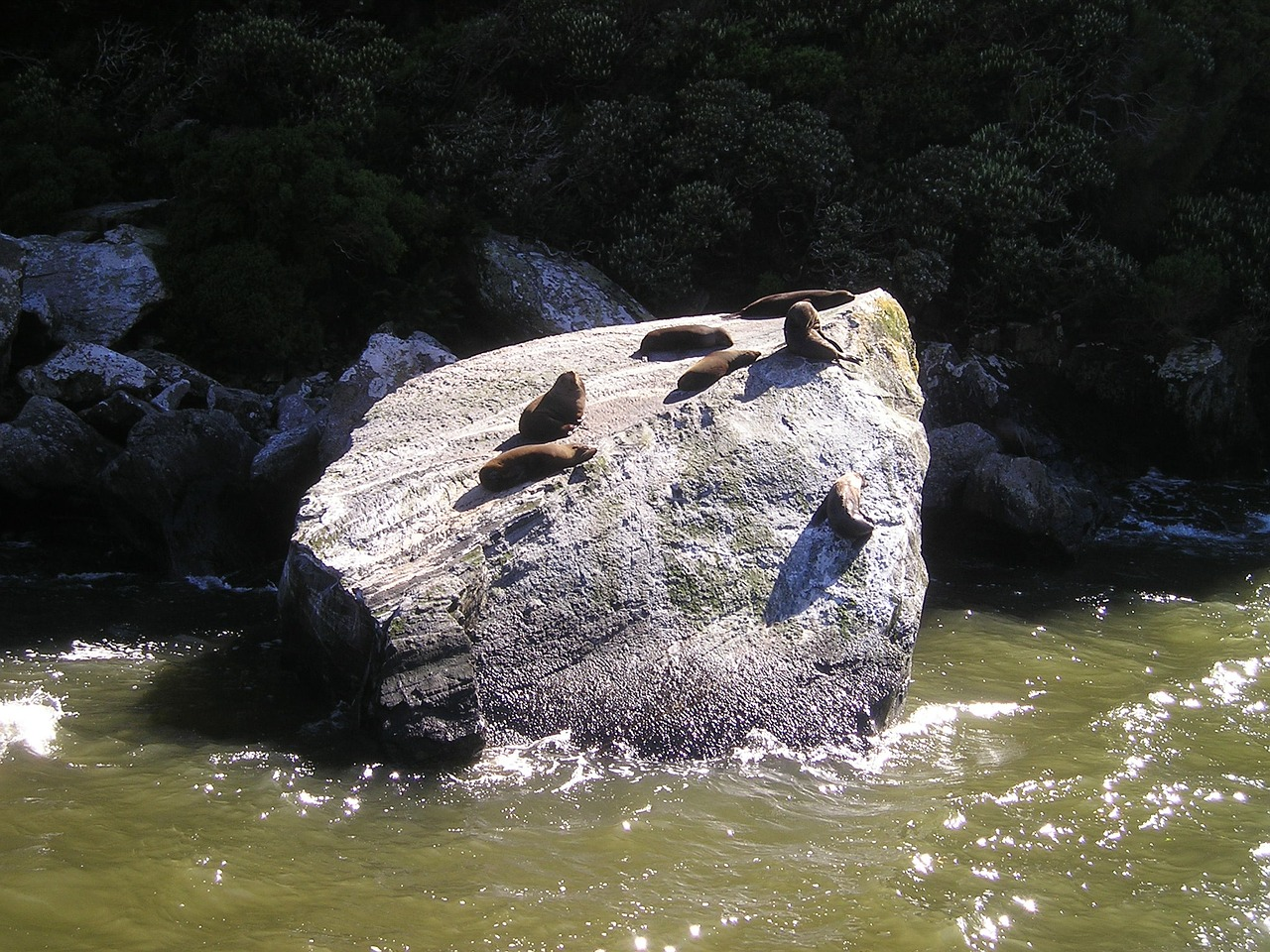 seals new zealand fiordland free photo