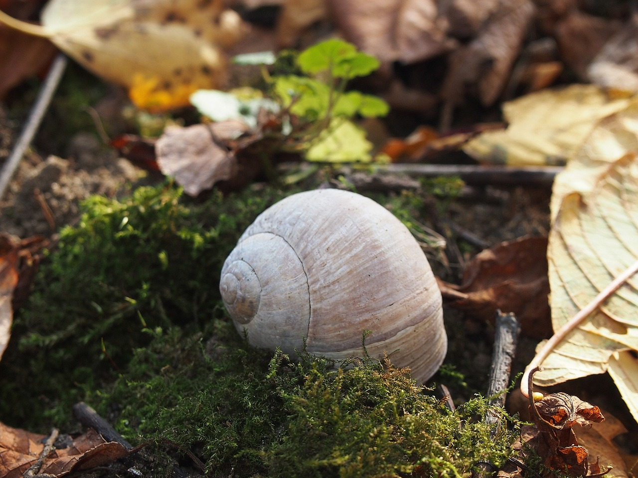 seashell undergrowth snail free picture