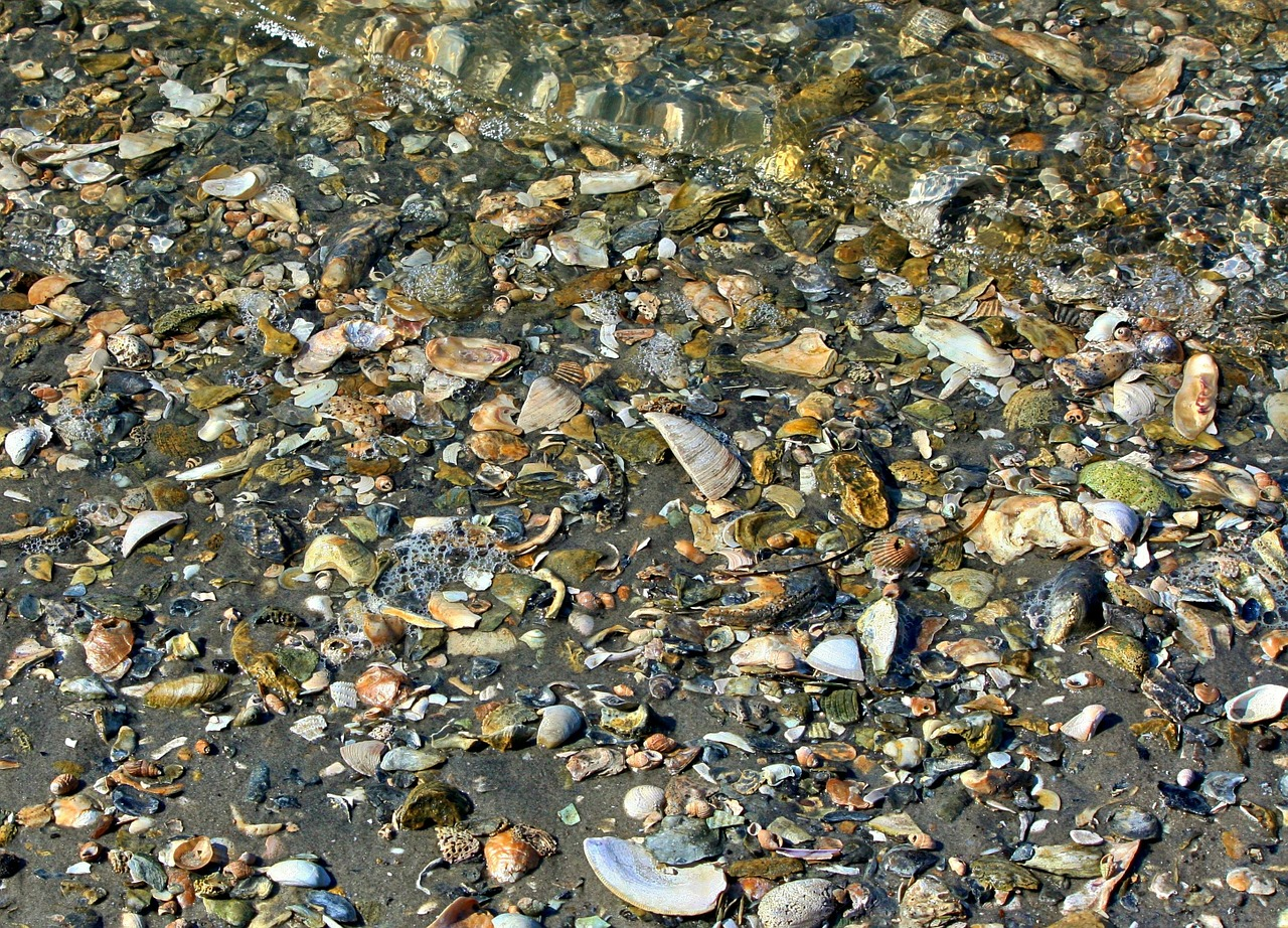 seashells beach texture free photo