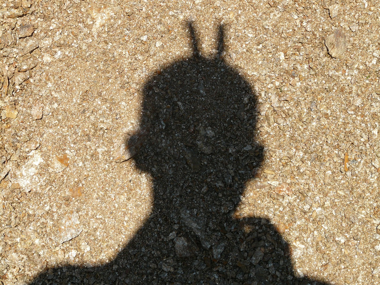 shadow shadow play human free photo