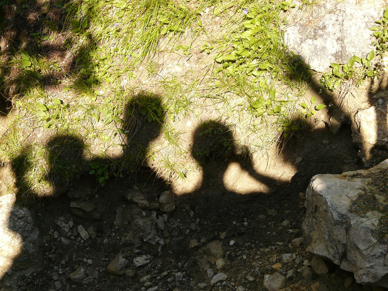 shadow play shadow head free picture