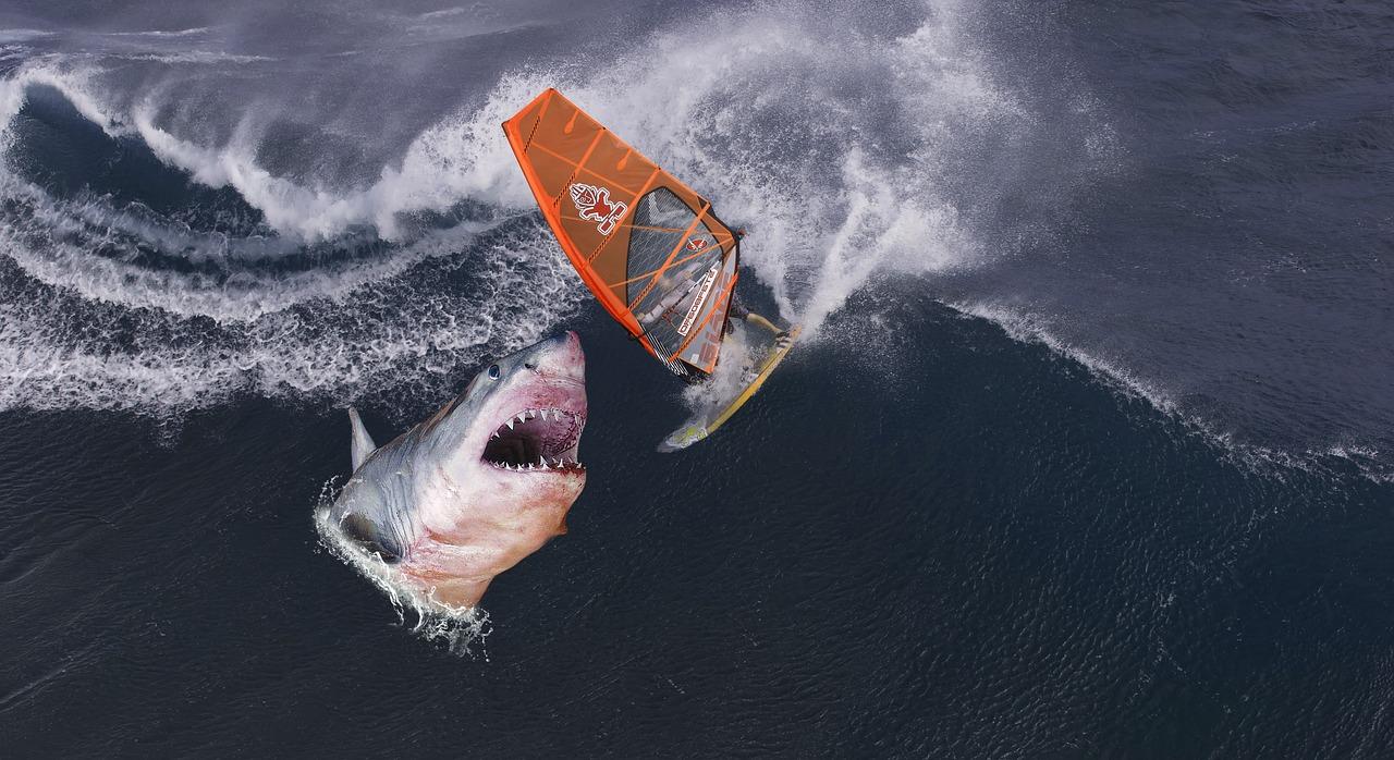 Shark Surfer Wave Fantasy Surfing Free Photo From Needpix Com