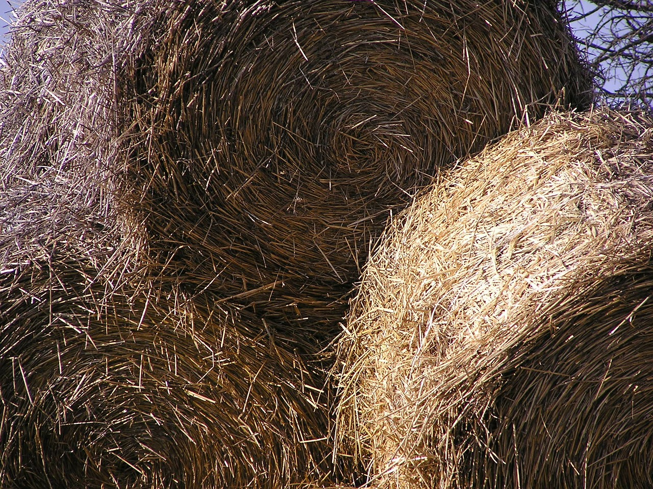 sheaves hay azienda agricola free photo