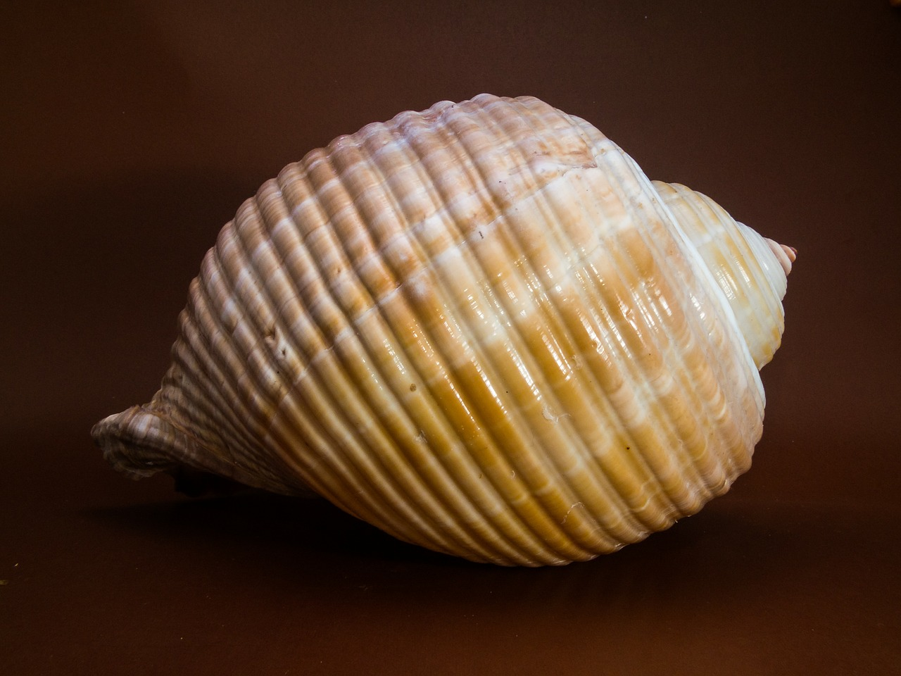shell snail close free photo