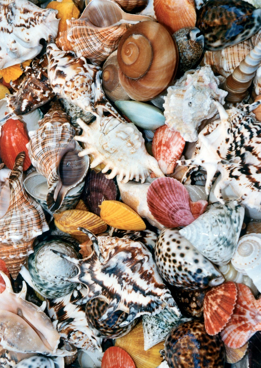 shell mussels colorful free photo