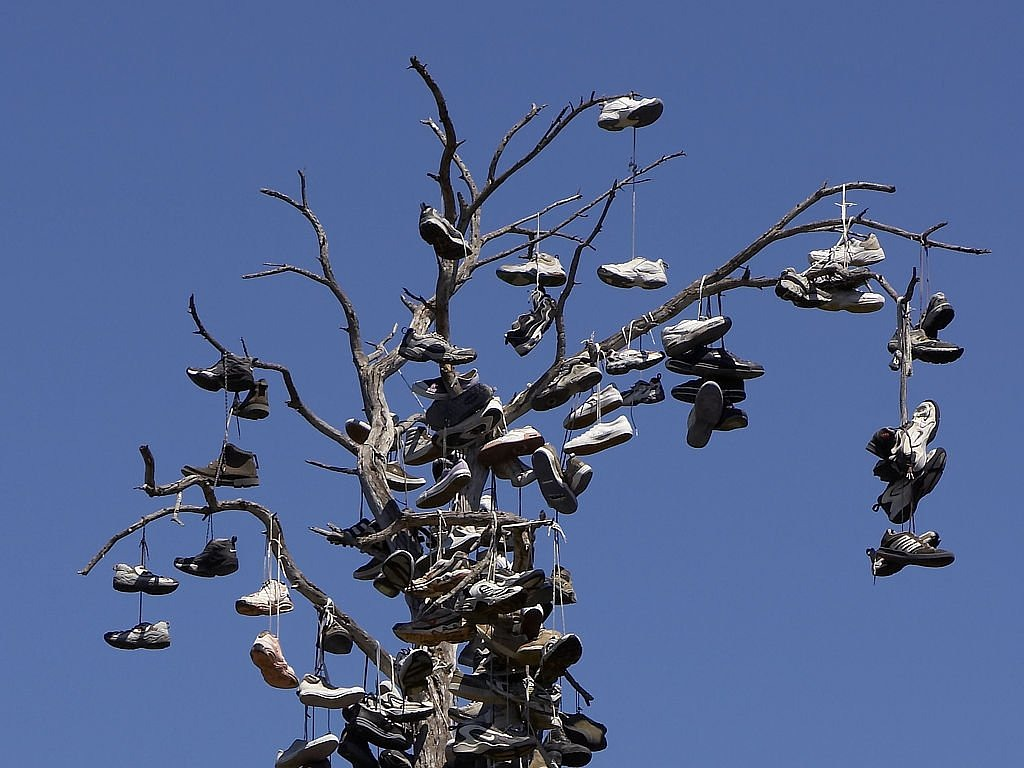 shoes tree balboa park free photo