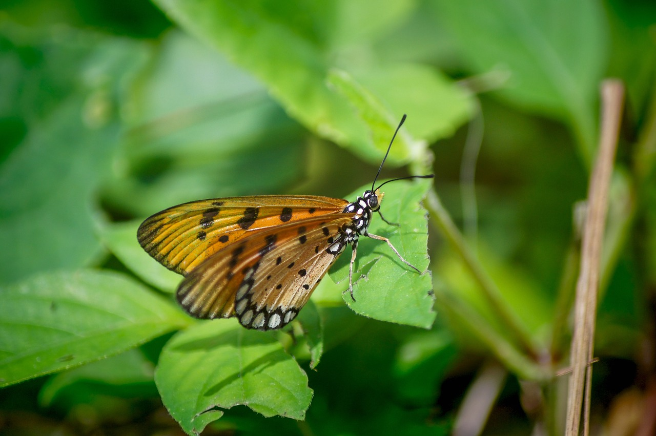 singapore coney island butterfly nature free photo