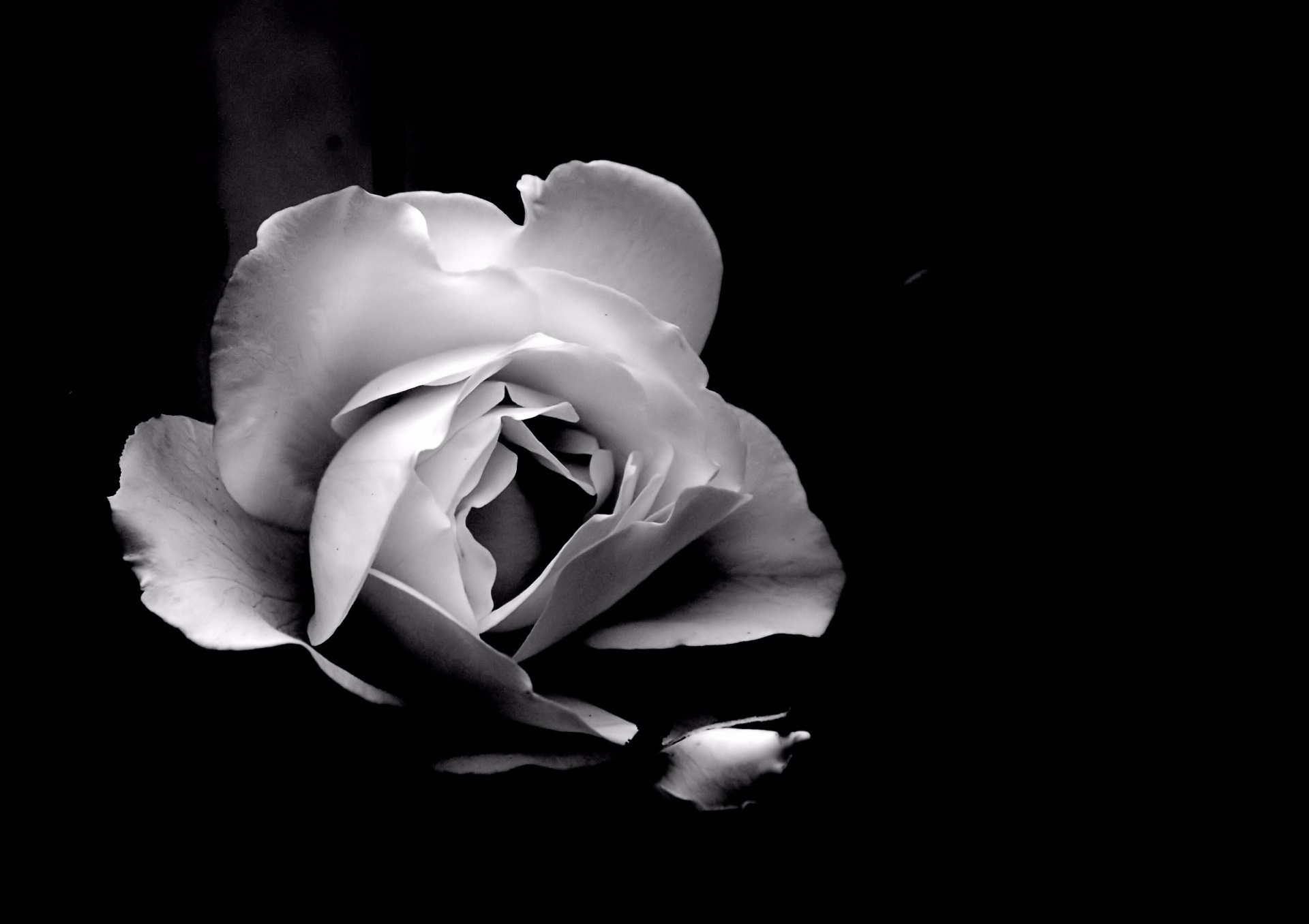 White art black photography and