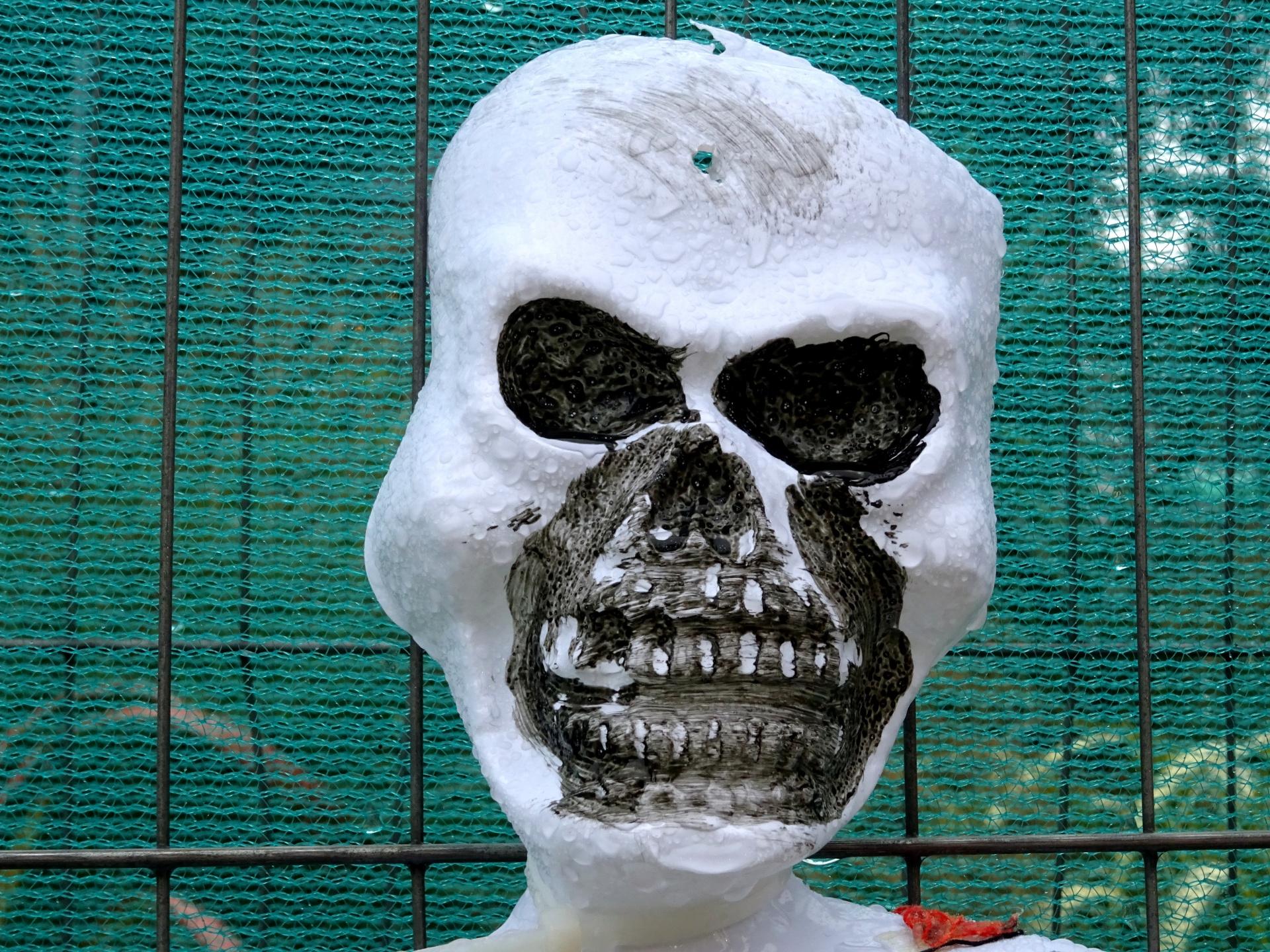 Skeleton,skeletons,skull,skulls,scare - free image from need