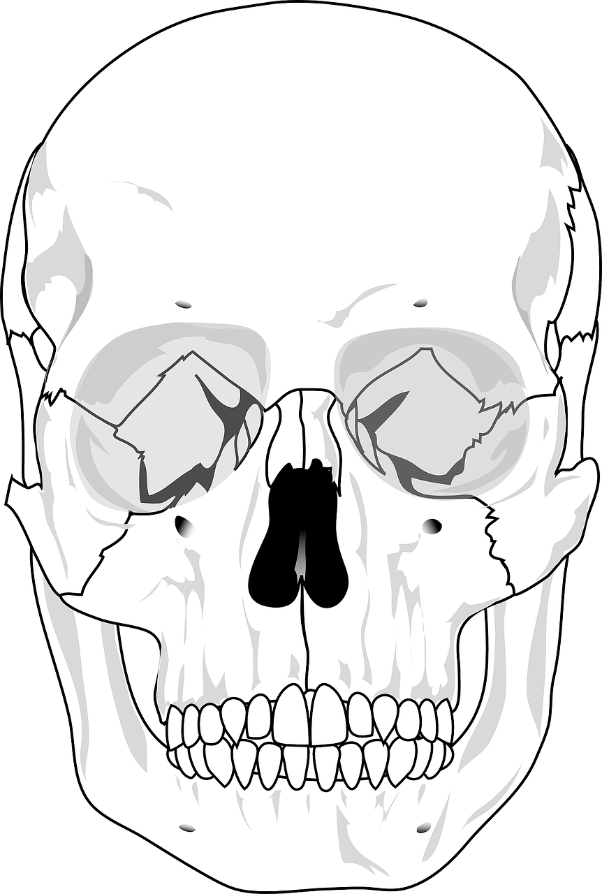 skull human diagram free photo
