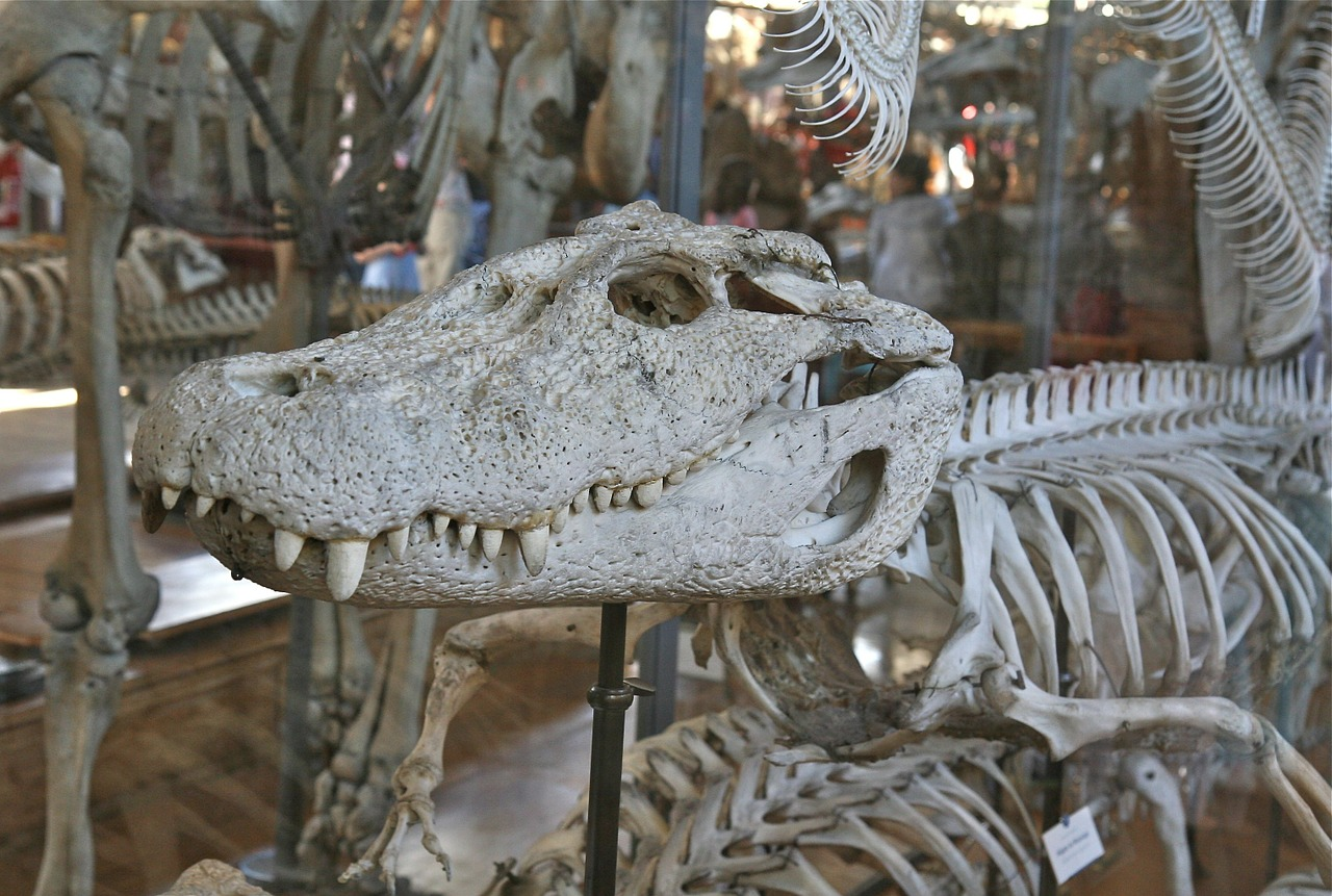 skull white crocodile free picture