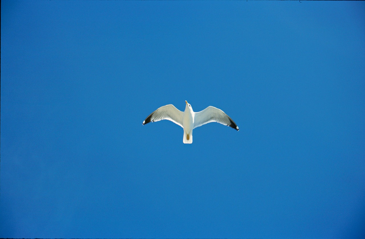 sky seagull blue free photo