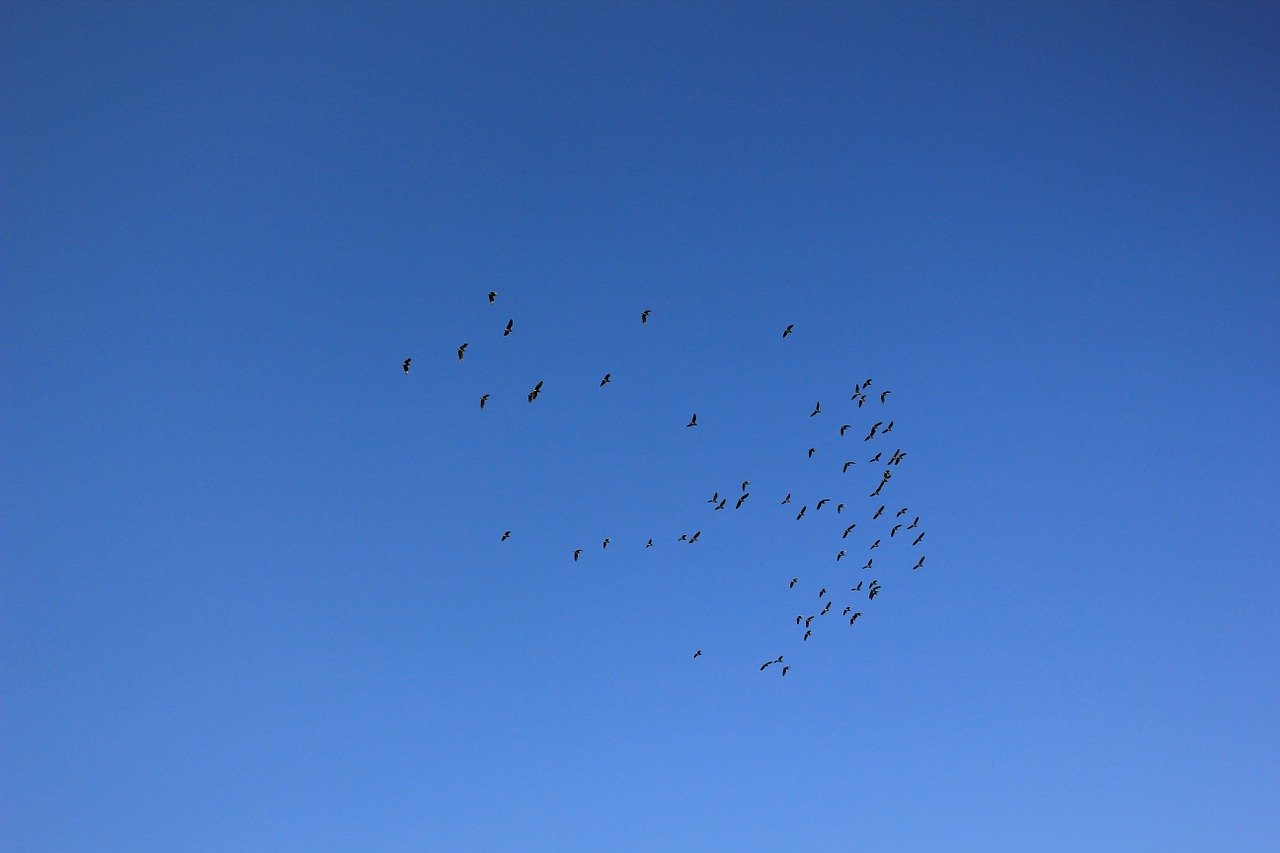 sky birds fly free photo
