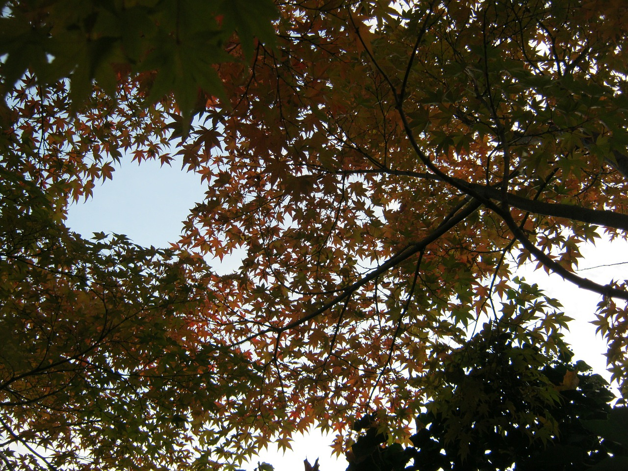 sky view canopy autumn free photo